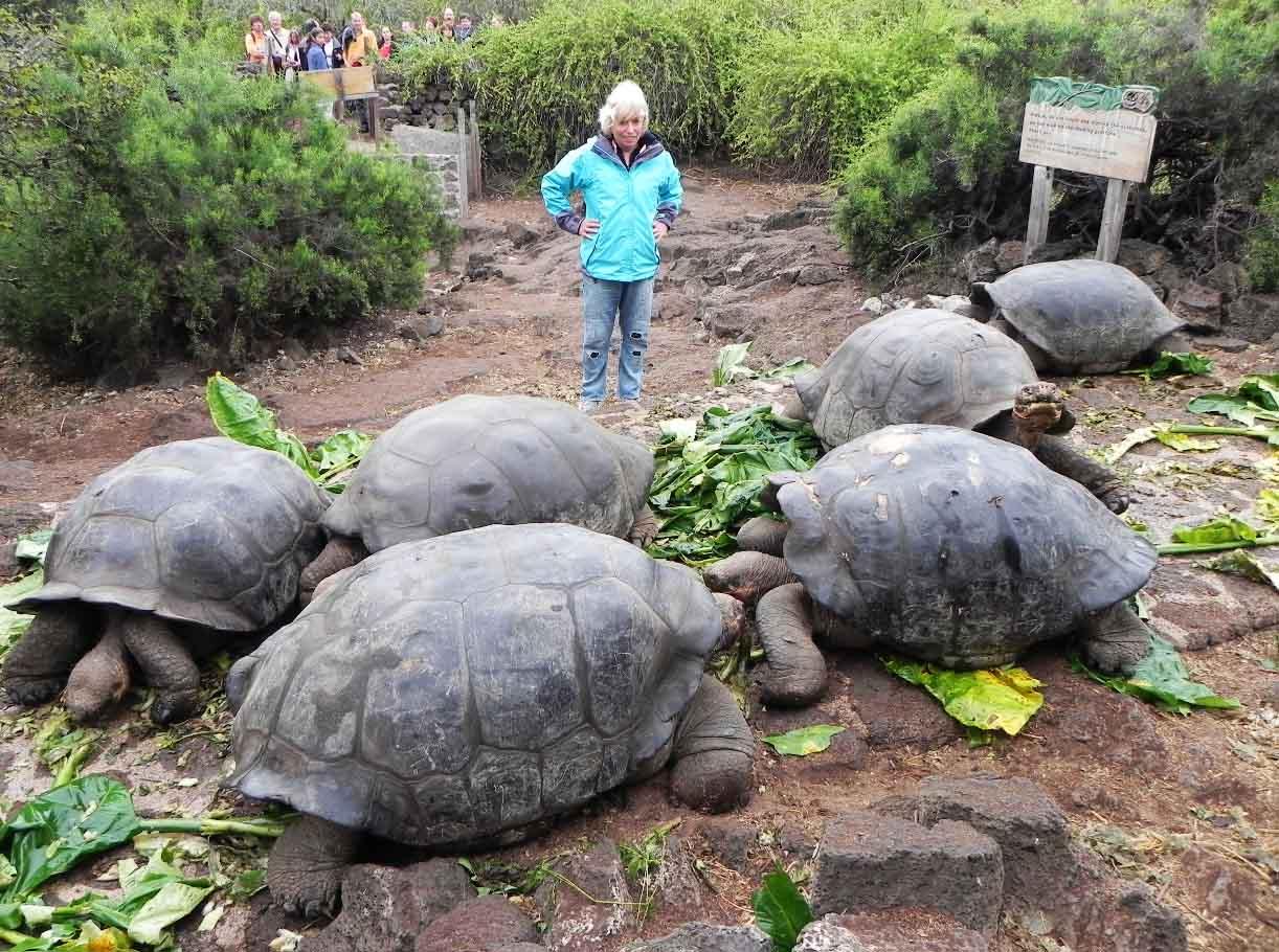 tortugas gigantes de Galápagos